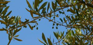 Greybe Fine Olive Products Delivery Policy and Rates